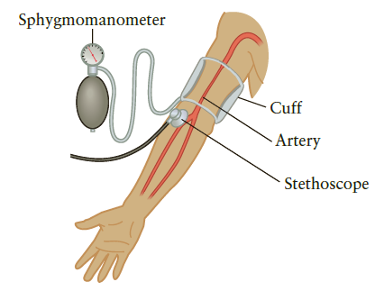 Sphygmomanometer Cuff - Artery Stethoscope